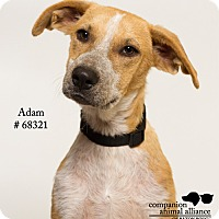 Adopt A Pet :: Adam  (Foster Care) - Baton Rouge, LA