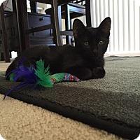 Adopt A Pet :: Binx - Oxnard, CA