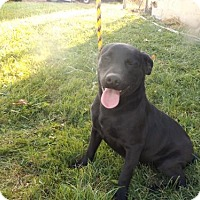 Adopt A Pet :: Leo - Zaleski, OH