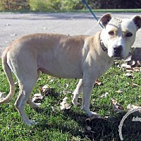 Adopt A Pet :: Delilah - Sidney, OH
