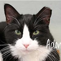 Adopt A Pet :: Adonna - Wichita Falls, TX