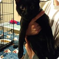 Adopt A Pet :: Rafael - Ortonville, MI