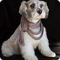 Adopt A Pet :: Greta - Phelan, CA