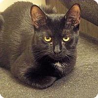 Adopt A Pet :: Kale - Secaucus, NJ