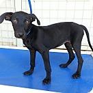 Adopt A Pet :: Mae