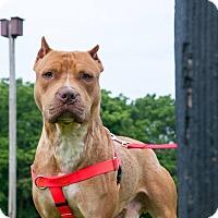 Adopt A Pet :: Otter - Villa Park, IL