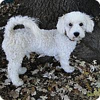 Adopt A Pet :: Flash - Walnut Creek, CA