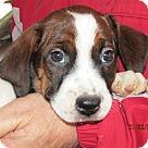 Adopt A Pet :: Eden