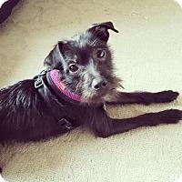 Adopt A Pet :: Sebastian Bach - Jersey City, NJ