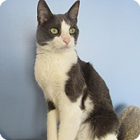 Adopt A Pet :: Johnny - Northfield, MN