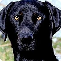 Adopt A Pet :: BURKE(THE