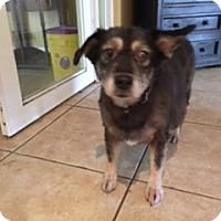 Adopt A Pet :: Maggie - Hallandale, FL