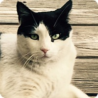 Adopt A Pet :: Lou - Courtesy Listing - Sparta, NJ