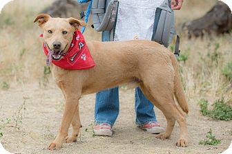 Labrador Retriever Mix Dog for adoption in Pasadena, California - Gary