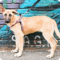 Adopt A Pet :: Brittany Howard - Jersey City, NJ