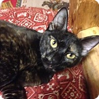 Adopt A Pet :: Snickers - Fort Collins, CO