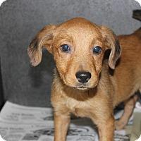 Adopt A Pet :: Weezie - Philadelphia, PA