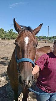 Quarterhorse Mix for adoption in Hitchcock, Texas - Pocahantas