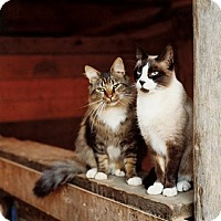 Adopt A Pet :: Sterilized Barn Cats (Outdoor) - Manitowoc, WI