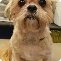 Adopt A Pet :: Benjamin Mahoning - Pataskala, OH