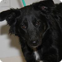 Adopt A Pet :: Stella - Marietta, OH