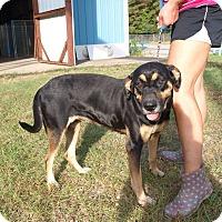 Adopt A Pet :: Molly - Oakdale, LA