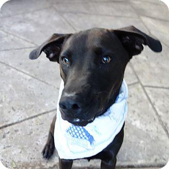 Retriever (Unknown Type)/Shepherd (Unknown Type) Mix Dog for adoption in St Petersburg, Florida - Baron ~ ADORES Children