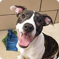 Adopt A Pet :: SAM - Fort Wayne, IN