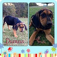 Adopt A Pet :: Dumas meet me 11/18 - Manchester, CT