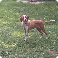 Adopt A Pet :: Rusty - Gerrardstown, WV