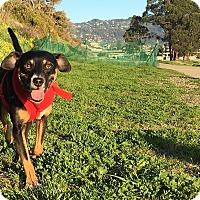 Adopt A Pet :: WILLA - Emeryville, CA
