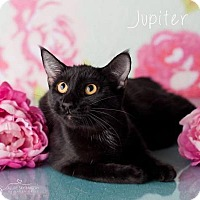 Adopt A Pet :: Jupiter Pop - Glendale, AZ