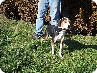 Foxhound Mix Dog for adoption in Germantown, Maryland - Hettie