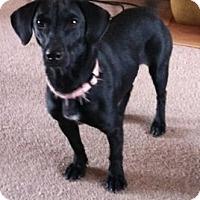 Adopt A Pet :: Dottie - River Falls, WI