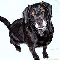 Adopt A Pet :: Harper - in Maine! - kennebunkport, ME