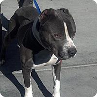 Adopt A Pet :: Cleveland URGENT - San Diego, CA