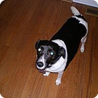Adopt A Pet :: Isabella - Apex, NC