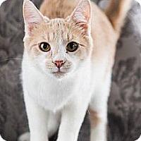 Adopt A Pet :: Wilbur - Eagan, MN