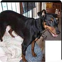 Adopt A Pet :: Maxx - Phoenix, AZ