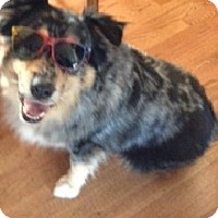Adopt A Pet :: Cooper - Washington, IL