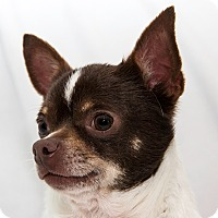 Adopt A Pet :: Lewis - Cumberland, MD