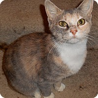 Adopt A Pet :: Emily - Chattanooga, TN