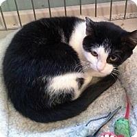Adopt A Pet :: Roxie - Raritan, NJ