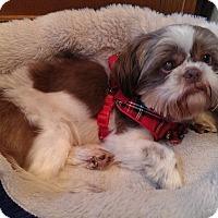 Adopt A Pet :: Simba - Hampton, VA
