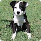 Adopt A Pet :: Dicey (POM-Dols)