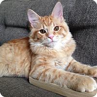 Adopt A Pet :: Keaton - St. Louis, MO