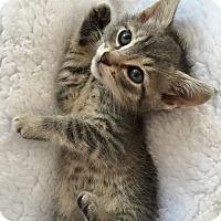 Adopt A Pet :: Jax - Island Park, NY
