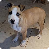 Adopt A Pet :: Buster - Norcross, GA