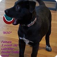 Adopt A Pet :: Boo - El Cajon, CA