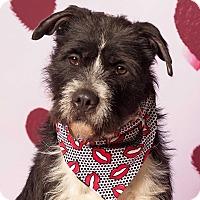 Adopt A Pet :: Eugene - Gilbert, AZ